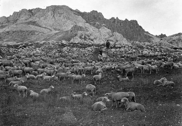 familia-Hidalgo-Alvarez-de-Sena-de-Luna-pastores-ovejas-hidalgas