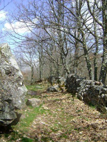 camino por el robledal-ruta pastores trashumantes de merinas-Las hidalgas